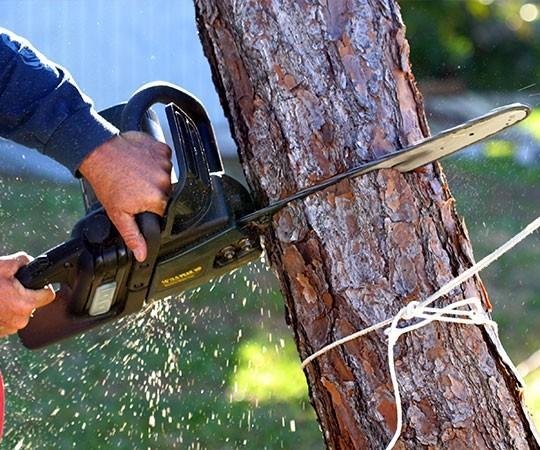 Спил деревьев в Люберцах и Московской области