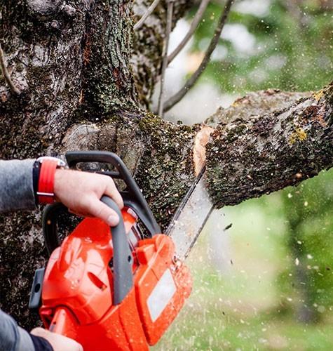 Услуга по спиливанию деревьев в Люберцах